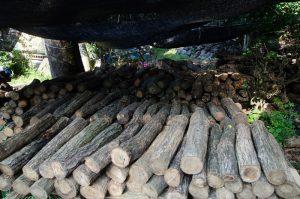 原木しいたけ_栽培方法1
